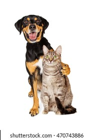 Funny photo of a happy and smiling cat with arm around a friendly cat