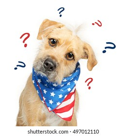 Funny photo of scruffy dog confused over American politics