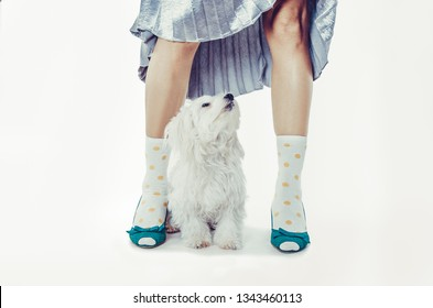Funny photo of sexy woman legs and a white dog looking up. Isolated on white background