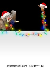Funny photo of zoo elephant and giraffe holding bright Christmas holiday string lights over blank white sign