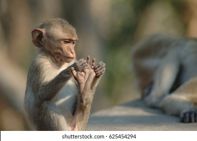 Funny pic of monkey count his toes with confuse face.