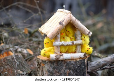 Funny picture of Easter chicks in a bird feeder.