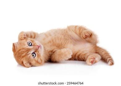 Funny playful kitten