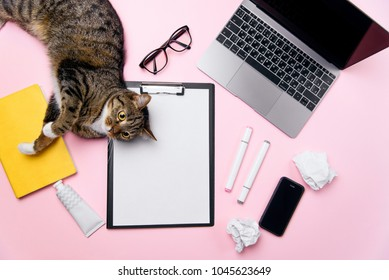 Funny playfull cat lying on woman's office desk. Top view of pink office desk with white sheet of paper with free copy space, laptop, smart phone, glasses, notebook, crumpled paper balls and supplies.