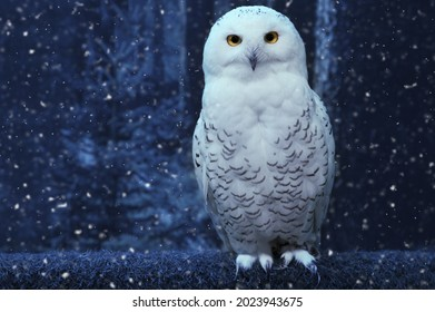 Funny polar owl perch on magic dark blue forest background with falling snow.Arctic white owl with yellow eyes close up.Predatory bird in wild nature habitat in winter.New year concept with copy space