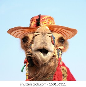 Funny portrait of camel with hat