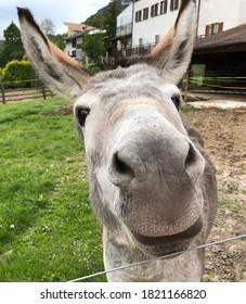 Funny portrait of a donkey