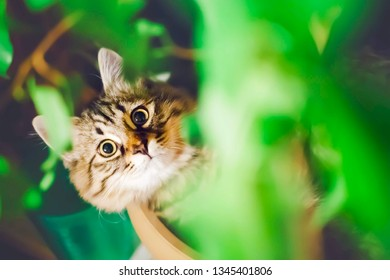 funny portrait of a fluffy beige cat sitting in a long plant pot with green grass, with a dark green background