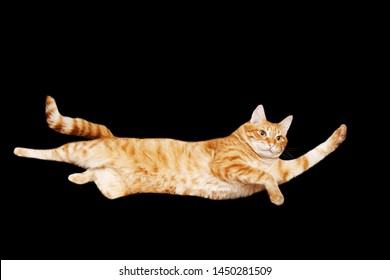 Funny portrait of a flying red cat on a black background. Isolated on black. Copyspace.
