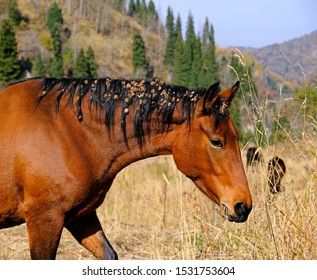 Funny portrait of a horse with thorns on his head and mane on the mountain pasture in autumn season