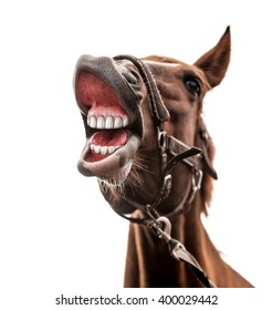 Funny portrait of smiling horse with unreal white teeth isolated on  white background. Clipping path included