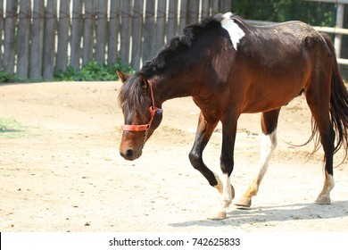 Funny portrait of warmblood brown horse in the farm, backgrounds, animal live wallpaper