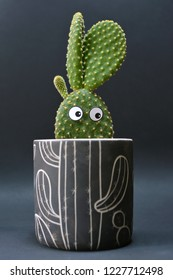Funny potted Opuntia microdasys bunny ears cactus with googly eyes in front of dark background