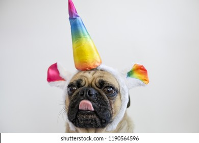 Funny pug dog dressed up as a rainbow unicorn with tongue sticking out
