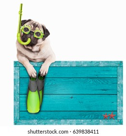 funny pug dog puppy on blue vintage wooden beach sign, with goggles, snorkel and flippers for snorkeling, isolated on white background