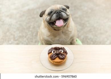 Funny pug dog waiting to eat Chocolate pug cake homemade.