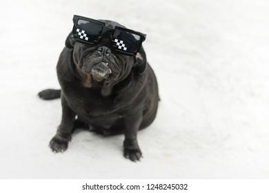 Funny pug dog wearing glasses on concrete floor.