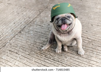 Funny pug dog wearing soldier costume.(Funny pug dog wearing soldier helmet on concrete road.)