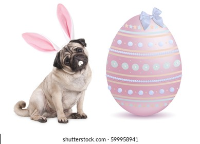funny pug puppy dog with bunny ears diadem sitting next to big pastel pink easter egg, isolated on white background