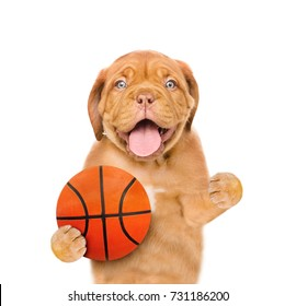 Funny puppy with basketball ball. Isolated on white background