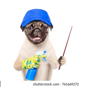 Funny puppy in blue hat with a spray  pointing away. isolated on white background.