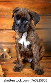 Funny puppy boxer sitting on a wooden background