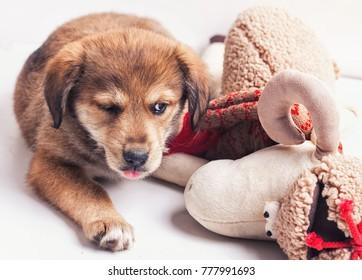 Funny puppy dog