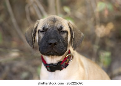 Funny puppy face has his eyes half closed outdoors.