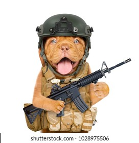 Funny puppy in protective helmet and  tactical vest with M16 rifle in paws. isolated on white background