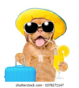 Funny puppy in summer hat with sunglasses holds tropic cocktail and suitcase. isolated on white background