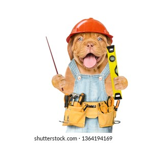 Funny puppy worker  with tool belt and  spirit level and pointing away on empty space.  Isolated on white background