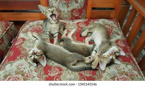 funny quadruplets cats