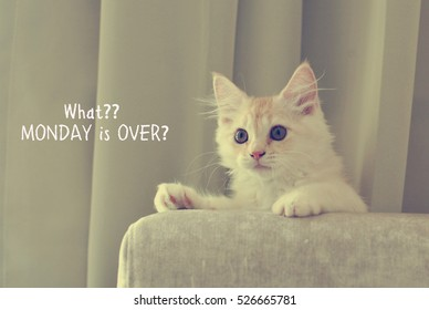 Funny quote with kitten image - What?? MONDAY is OVER?