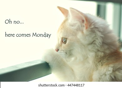 "Funny quote with phrase "" Oh no..here comes Monday"" with blur image of cat looking out of a window as background retro style."