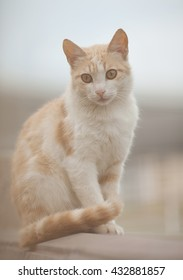 Funny red cat in the streets. sunny color. blurred background.