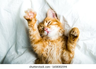 Funny red kitten in the bed. Ginger cat on white blanket. Relaxing and happy morning.