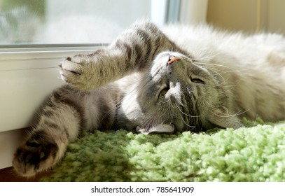 Funny resting cat in the balcony on sunny hot summer day, sleepy cat, young kitten in the terrace, half sleepy cat with open eyes