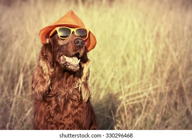 Funny retro dog wearing sunglasses and hat