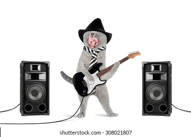 funny rock star cat with guitar and speakers on white background