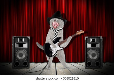 funny rock star cat with guitar and speakers on stage