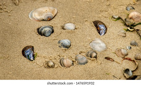 funny sea shell face, smiling happy holiday travel