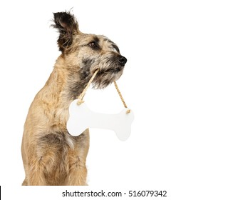 funny shaggy dog sitting on isolated background looking away and holding a sign in the form of pits