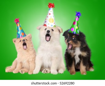 Funny Singing Birthday Celebrating Puppy Dogs Wearing Party Hats