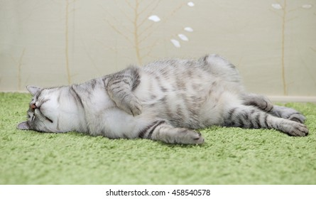 Funny sleeping cat on a green carpet