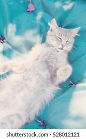 Funny sleeping domestic cat