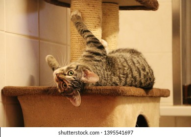 funny small cat is lying on a scratching post