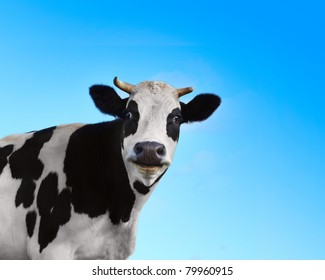 black and white cow images stock photos vectors shutterstock