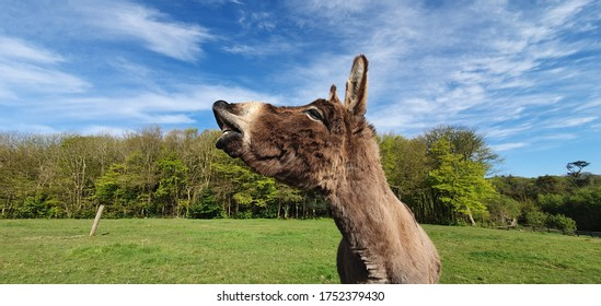 Funny smiling donkey on a green meadow with blue sky.