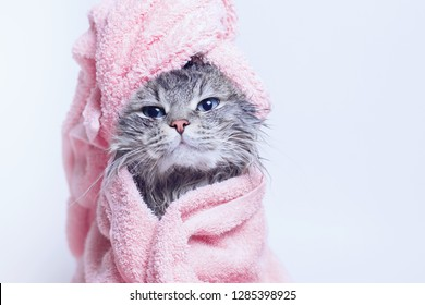Funny smiling wet gray tabby cute kitten after bath wrapped in pink towel with blue eyes. Pets and lifestyle concept. Just washed lovely fluffy cat with towel around his head on grey background.