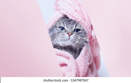 Funny smiling wet gray tabby cute kitten after bath wrapped in pink towel with beautiful eyes. Pets and lifestyle concept. Just washed lovely fluffy cat with towel around his head.